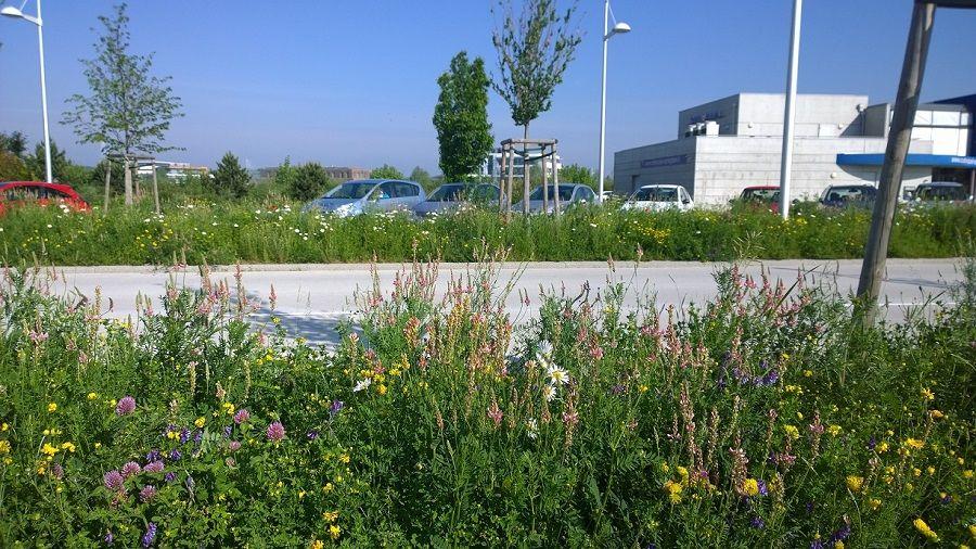 Gestion differenciee : prairie fleurie